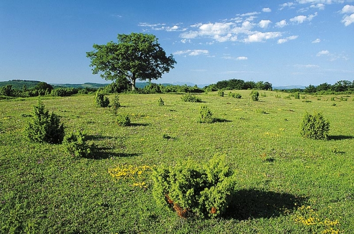 IZKI Parke Naturala. El Raso. DFA