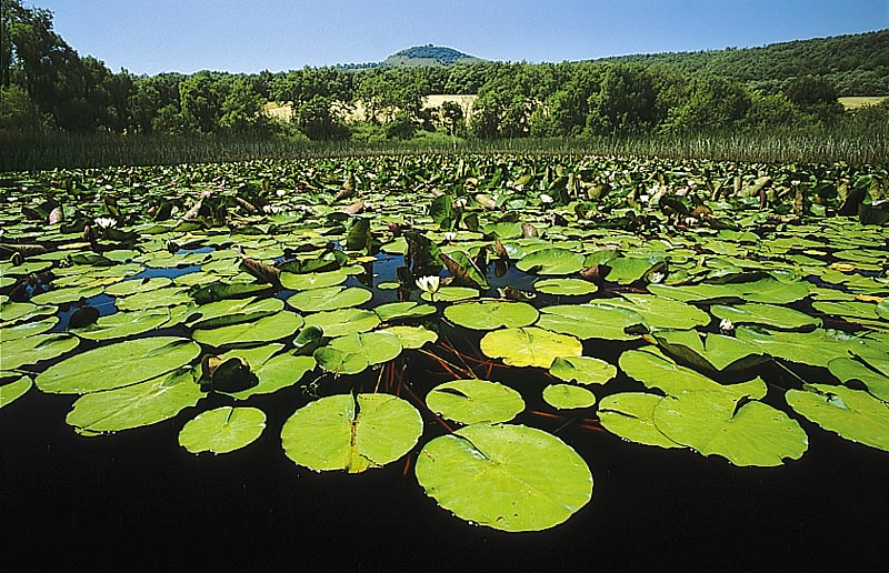 Parque natural Izki. Laguna de Olandina. DFA